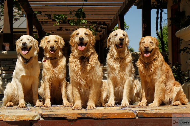 Sundogs3